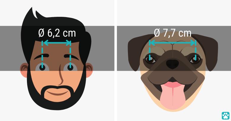 Alivio ocular del perro en comparado con los humanos
