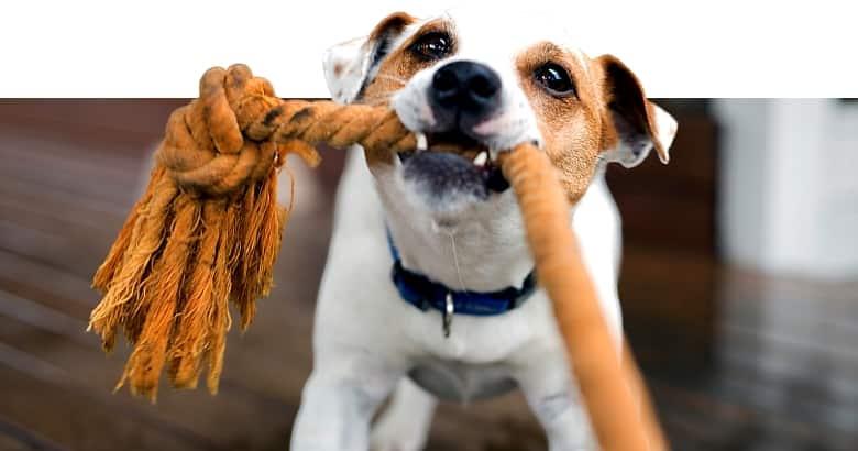Cachorro Abrumado