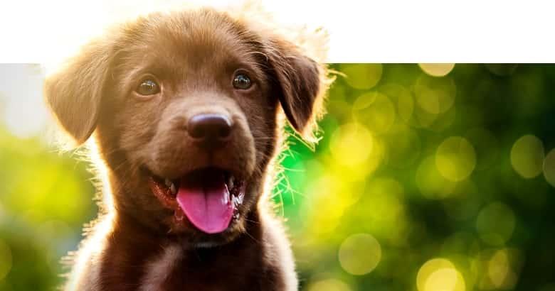 Cachorro Hiperactivo
