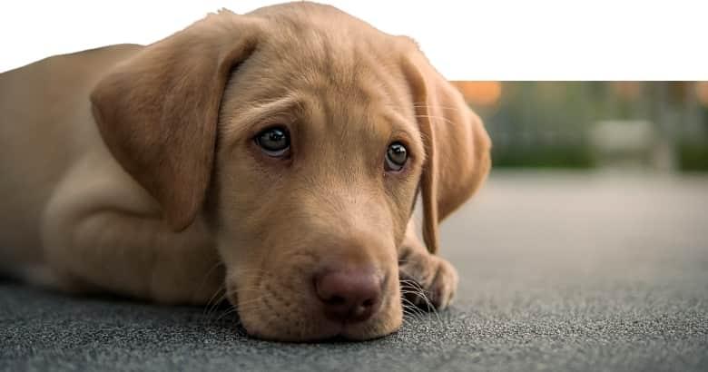 El Perro Agotado