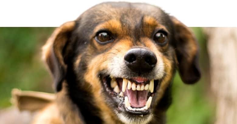 El Perro Gruñe (2)