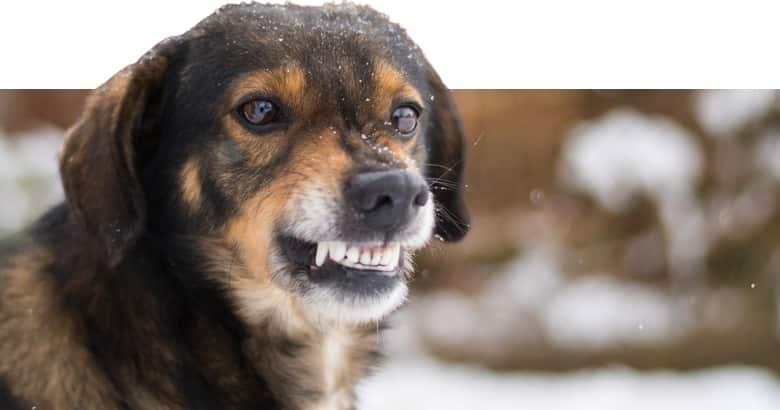 El Perro Gruñe (4)