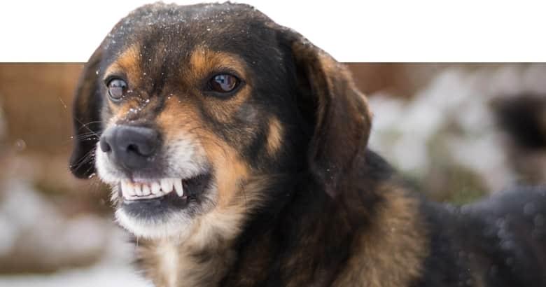 El Perro Gruñe (5)