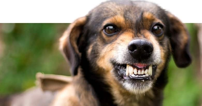 El Perro Gruñe