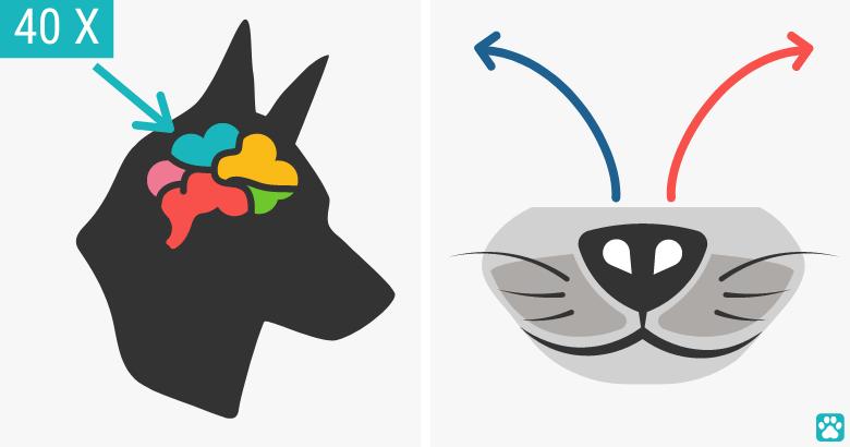 El sentido del olfato de los perros