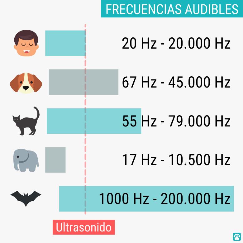 Frecuencias audibles de perros en comparación con humanos y otros animales