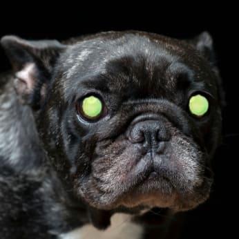 Ojos brillantes de perros en la oscuridad