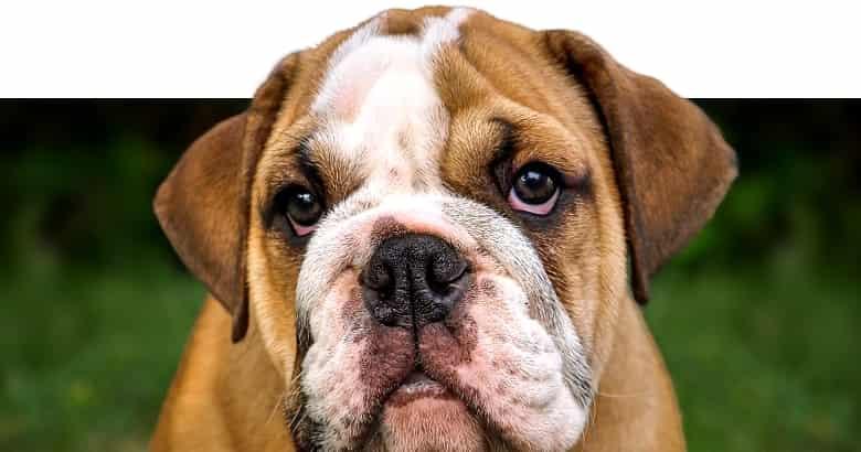 Perro (2)