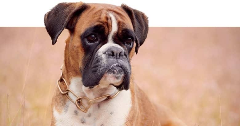Perro (3)