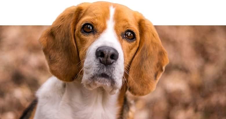Perro (5)