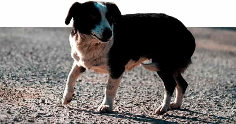 Perro Con Cola Entre Las Patas (3)