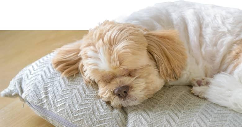 Perro Durmiendo (2)