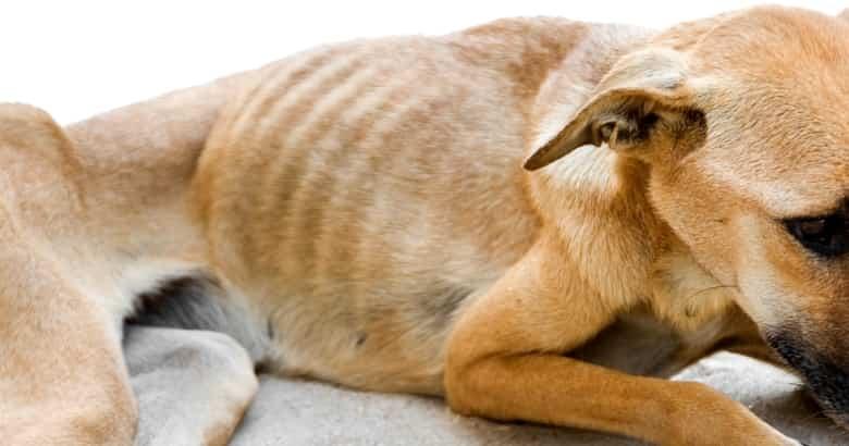 Perro Hambriento (2)