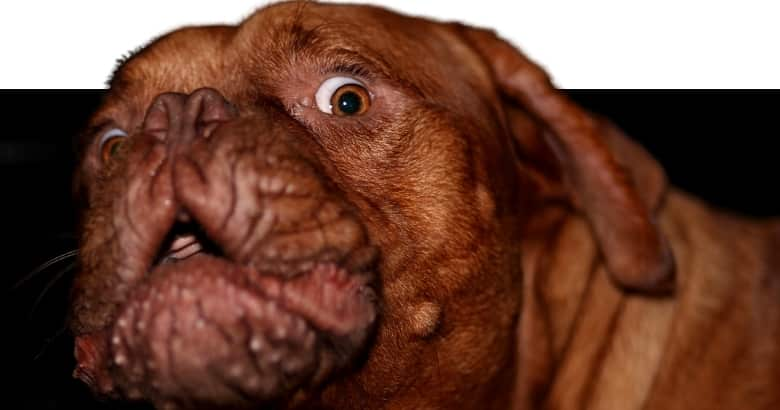 Perro Sorprendido