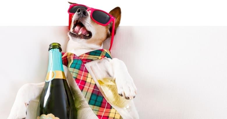 Perro con alcohol