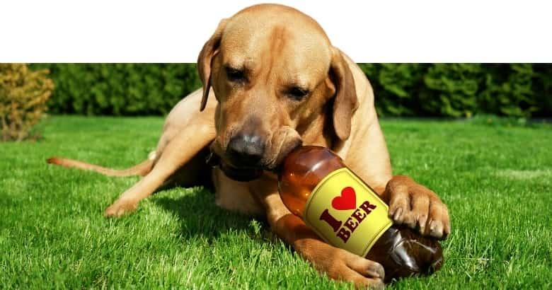 Perro con cerveza
