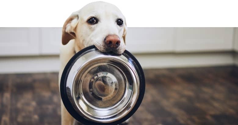 Perro con cuenco