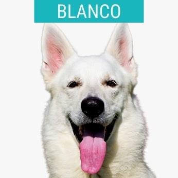 Perros Pastores Blancos