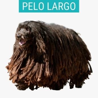 Perros Pastores De Pelo Largo