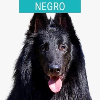 Perros Pastores Negros