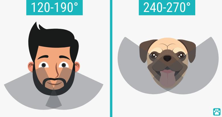 Perspectivas de perros versus humanos