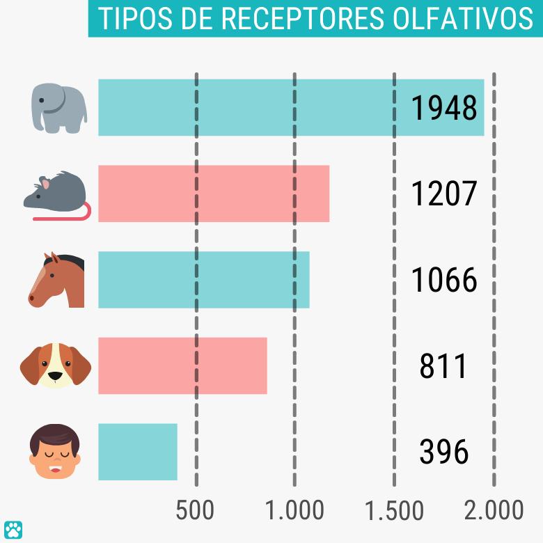 Tipos y cantidad de receptores olfativos en perros, humanos y otros animales