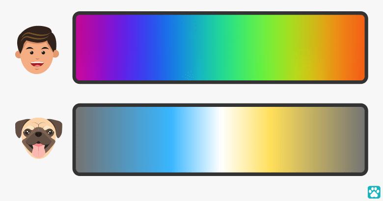Visión del color de los en comparación con los humanos